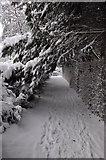 SS9612 : Tiverton : Snowy Footpath by Lewis Clarke
