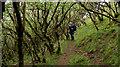 NM4443 : Footpath through stunted trees above Allt Dun Choinichean by Trevor Littlewood