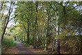 TQ5136 : Old railway cutting, Forest Way by N Chadwick