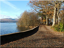 NS3882 : Path in Balloch Castle Country Park by Lairich Rig