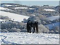 SX8386 : From Bridford Hill towards Doddiscombleigh by Graeme