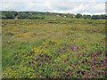 SO6378 : Catherton Common by Trevor Rickard