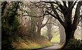 J3268 : The misty Giant's Ring Road, Belfast (3) by Albert Bridge
