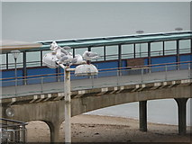 SZ1191 : Boscombe: seagulls on lamppost by Chris Downer