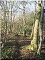 TR2951 : Footpath in Craythorne Firs by David Anstiss