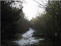 TR3051 : Bridleway to Tilmanstone by David Anstiss