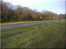 TQ1350 : Ranmore Common Road, Dorking by David Howard