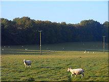 SU7037 : Pasture, Chawton by Andrew Smith