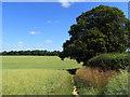 SU8398 : Farmland, Walter's Ash by Andrew Smith