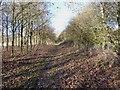 SO6799 : Bridleway near Highfield Plantation by Richard Law