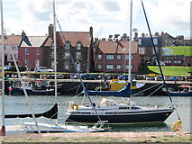 NT6779 : Houses at Victoria Harbour, Dunbar by Jennifer Petrie