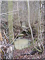 TM3664 : Gull Stream running through Lonely Wood by Adrian Cable