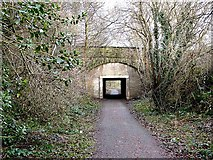 NZ1164 : Hadrian's Cycleway at Wylam by Oliver Dixon