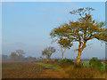 SP7907 : Farmland, Kimble by Andrew Smith