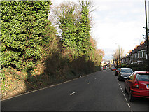 TQ4077 : Westcombe Hill, upper section by Stephen Craven