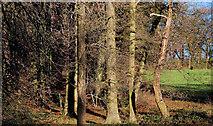 J4774 : Trees near Newtownards by Albert Bridge