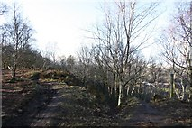SE1211 : Meltham Way, Honley Old Wood by Richard Kay