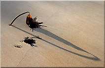 NU2422 : Seaweed and shadow by Walter Baxter