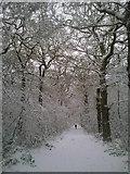 TQ4475 : A wintry walk in Oxleas Wood by Marathon