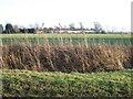 TF5317 : Jankinsfield Farm, Hay Green, Norfolk by Richard Humphrey