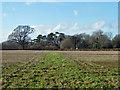 TQ3958 : Footpath 502 towards Chelsham church by Robin Webster