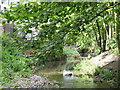 TQ3870 : The River Ravensbourne east of River Park Gardens, BR2 (3) by Mike Quinn