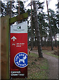 SK0117 : Cycle trail, Cannock Chase Forest by michael ely