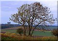 NZ3551 : Penshaw Monument by Carol Bleasdale