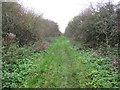TL3370 : Conger Lane by Hugh Venables