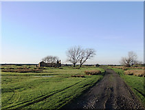 TQ7178 : The old Point Gates Road and the Poplars, near Lower Hope Point, Cliffe Marshes by Stefan Czapski