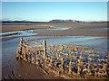 SD4780 : Fence, Sandside by Karl and Ali