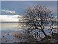 NO1200 : Loch Leven shoreline by William Starkey