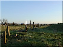 TQ7178 : Ruins of the explosives works, near Lower Hope Point (3): an alignment of posts by Stefan Czapski