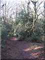TQ4164 : Footpath on Keston Common (5) by Mike Quinn