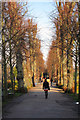 TR1457 : Tree lined path by Oast House Archive
