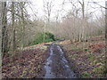NS8157 : Track in Murdostoun Woods by G Laird