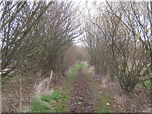 TR3256 : Bridleway to A256 / A256 Roundabout junction by David Anstiss