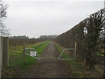 TR3256 : Bridleway to the A258 Deal Road by David Anstiss