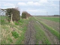 TR3156 : Footpath junction near Hill Cross Farm by David Anstiss