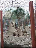 SE3238 : Tropical World - in the Desert House (with Meerkats) by C P Smith
