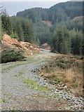 NM9109 : New forestry road by Patrick Mackie