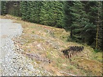 NM9109 : Old and new forestry roads by Patrick Mackie