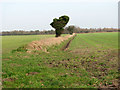 TG5002 : Field boundary ditch south-east of Wheatcroft Farm by Evelyn Simak