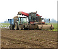 TG5002 : Sugar beet harvest, Bradwell by Evelyn Simak