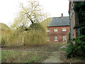 TM3897 : Hales Hospital - weeping willow in north courtyard by Evelyn Simak