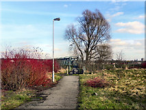 SD8100 : Path To Jubilee Bridge by David Dixon