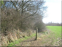 TR2841 : Footpath into Long Wood by David Anstiss