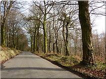 SX8979 : Road towards A 380 beyond Beggar's Bush, Haldon Forest by Tom Jolliffe