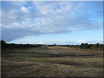 NT6281 : East Lothian Landscape : The Racetrack Between The Shelterbelts at Lochhouses Links by Richard West
