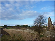 NT6281 : East Lothian Landscape : The Shelterbelts at Lochhouses Links - Seen From The Ruin On The Northern Edge Of Brownrig Wood by Richard West